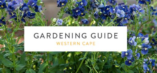 The Winter Garden in Cape Town