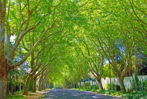 Bishopscourt road